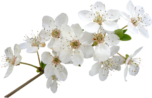 flowers-098 (2)